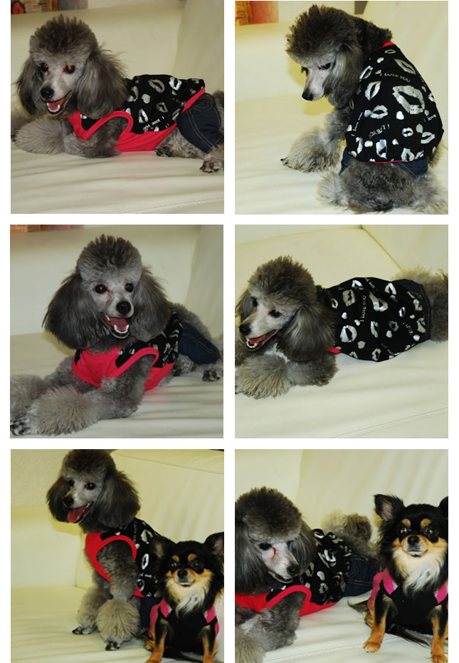 犬服のビックスマイル「キュート リップ ボリューム Tシャツ★ブラック」