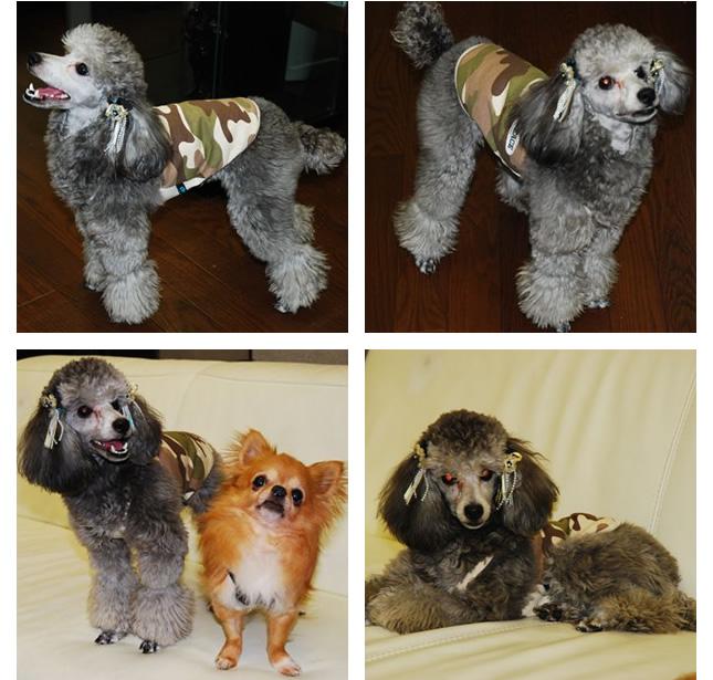 犬服のビックスマイル「アーミーキャミソール★ベージュ」