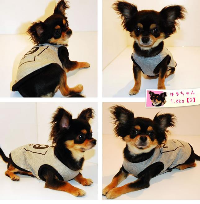 犬服のビックスマイル「セレブNo9 Tシャツ」