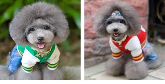 犬服のビックスマイル「キュートカラーのスタジアムジャンパー」