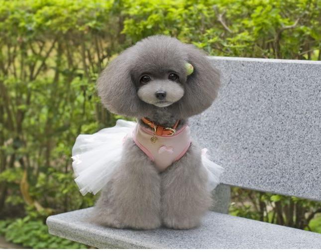 犬服のビックスマイル「バレリーナ リボンチュチュ」