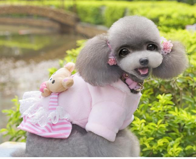 犬服のビックスマイル「くまたんフワフワワンピ」