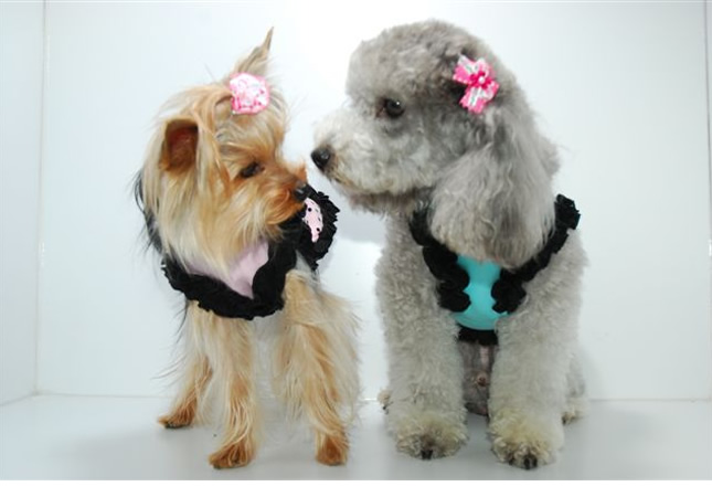 DOG HOLLYWOOD Hプリンセス