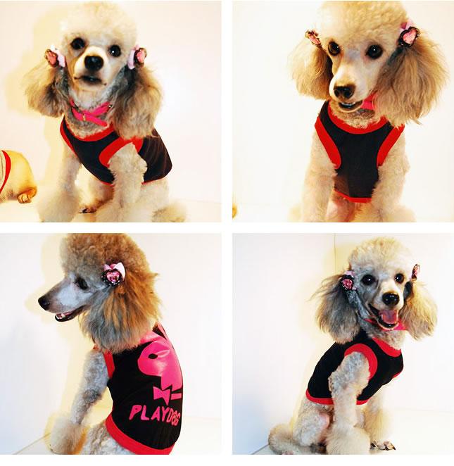 犬服のビックスマイル「パロディT」