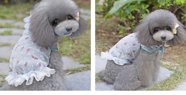 犬服のビックスマイル「ふんわりシフォンパーカー」